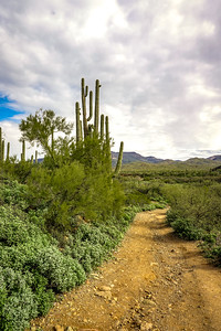 Lands of Arizona