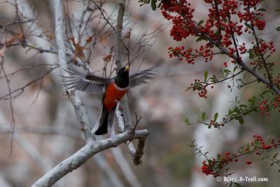 Madera Canyon Birds