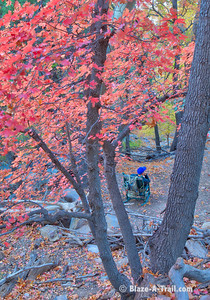 Ramsey Canyon Fall Colors