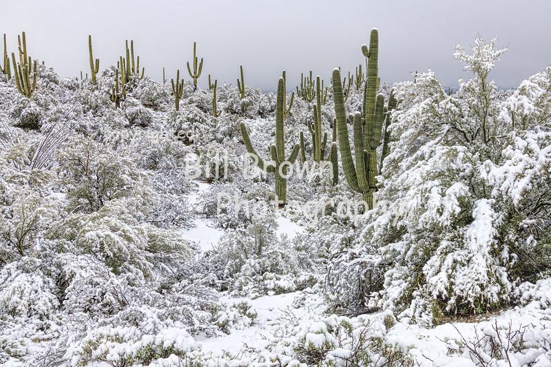 Desert Landscape in Snow