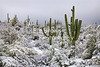 Snow in Saguaro Area