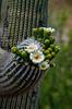 Saguaro flowering