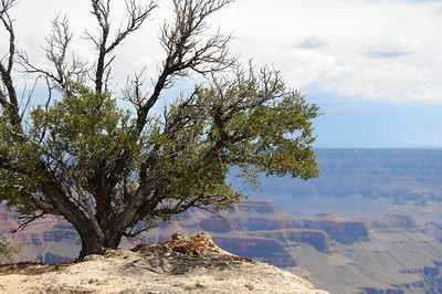 Arizona: Grand Canyon--North Rim 2011