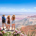 Beautiful mountain scenery in Arizona. Flowers blooming on  North Rim, Grand Canyon National Park, Arizona,  USA.