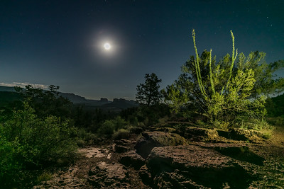 Ocotillo Moonlit