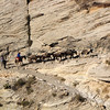Horse and mules haul supplies as well as tourist in and out of the canyon on a daily basis.