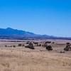 San Rafael Valley and the Huachuca Mountains