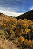 It's December and time for autumn colors in Box Canyon, Arizona.