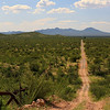 This is the road along the border west of Sasabe, Arizona.