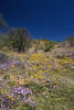 This is one of the spots we happened upon that was festooned with wildflowers.