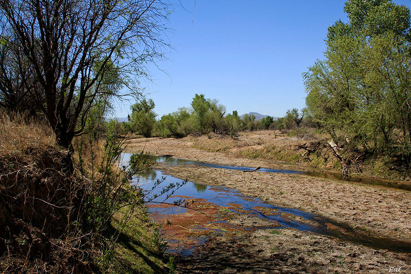 "This is a wet spot in the Santa Cruz River.  The subsurface water flowing under the river occasionally surfaces.  The word ""bac"" was the Pima Indian word for such places and is still found today in the place names:  ""Tubac"" and ""San Xavier del Bac""."