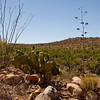 Desert plants along the trail.