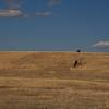 Horses grazing on a ranch in San Rafael Valley near Lochiel, Arizona.