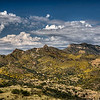 Autumn Gold -- Pajarito Mountains