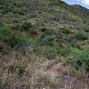 Wetback Trail