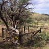 Near Helvetia, Arizona