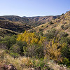 Autumn in Box Canyon.