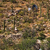 These ruins are in the Baboquivari Mountains on the Tohono O'odham Indian Reservation near Sapano Vaya, Arizona.  I am trying to learn more about the purpose and history of this site.