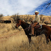 This Arizona cowboy is herding cattle in the Paloma area of the Patagonia Mountain foothills.