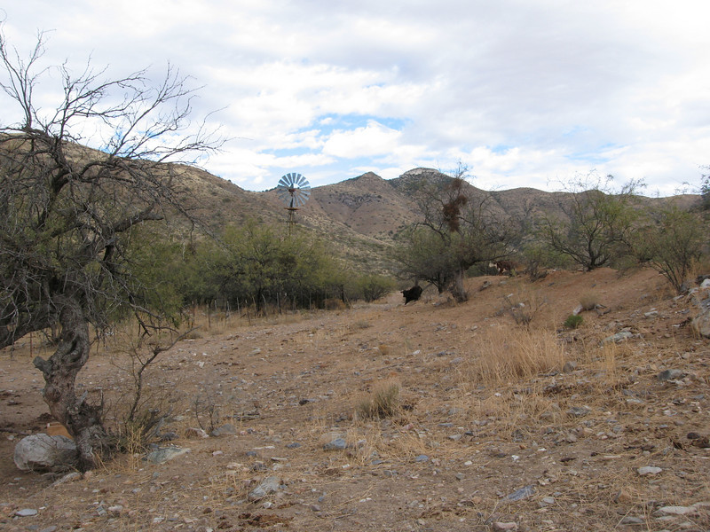 View of Mae West from the starting point at the corral.  Three spooked cows are fleeing the area.