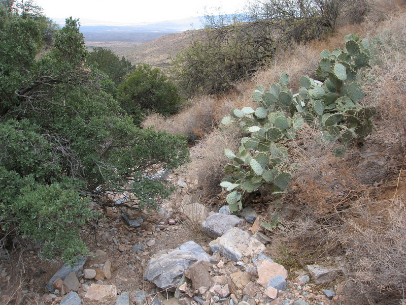 Being tired of the cactus, agave and loose rock, we tried the drainage bottom on the return.  It was different, but still congested with obstacles.
