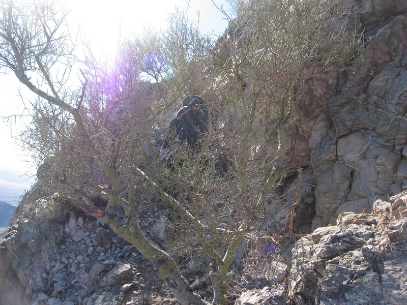 John makes it past a ledge with a small Palo Verde tree. From here, it is only about 10 ft to the summit.