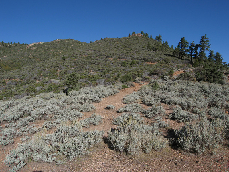 The trail leads up the ridge from the saddle.