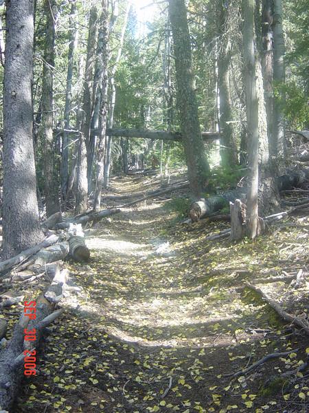 Flys Peak Trail