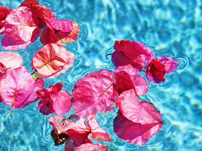 Flowers in the pool