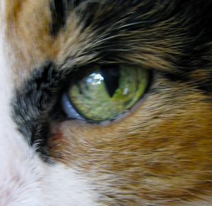 PJ's Eye