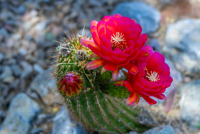 Flowers and Cacti