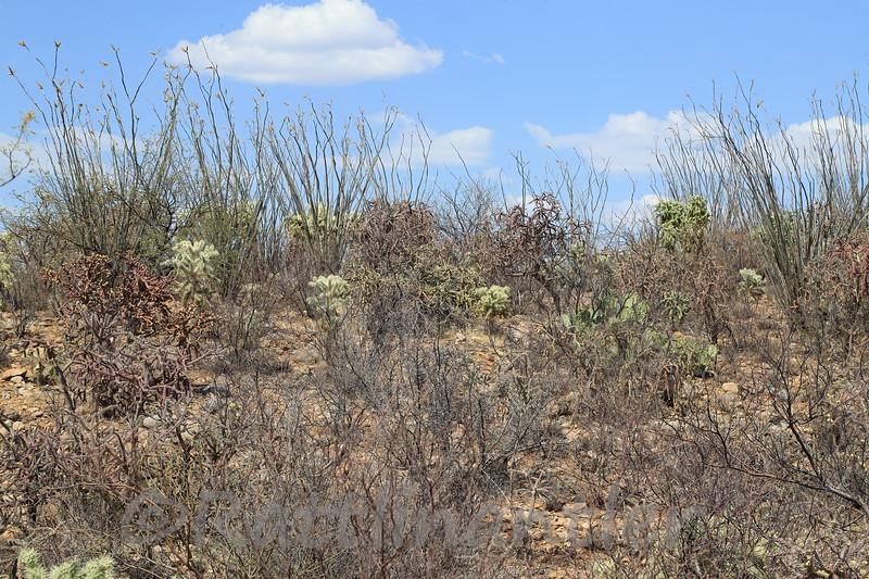6/17/2021<br /> Pima County, Arizona