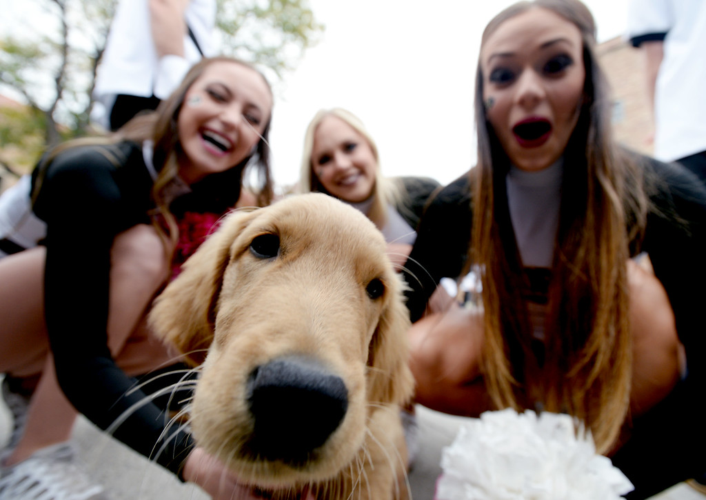 . BOULDER, CO: October 6, 2018: The CU Spirit Squad discover a puppy before the game with Arizona State on October 6, 2018. (Photo by Cliff Grassmick/Staff Photographer)