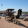 Beautiful draft horse pulling the surry as we left Goldfield.