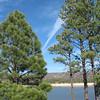 Bunch Reservoir