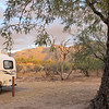 My campsite, B11, and the Santa Catalina mountains. I call 'em the 'Tetons of Tucson.'