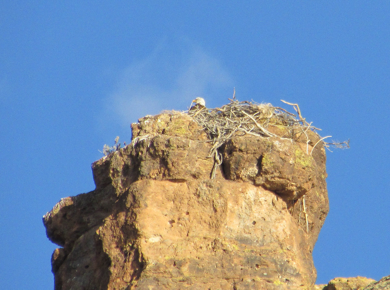 Passengers spotted a bald eagle in flight and tracked him to this nest along the north side of Canyon Lake.  Karen captured the first photo.