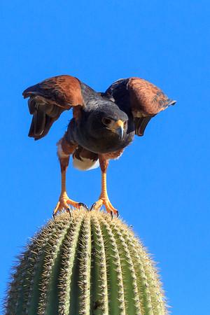 2016  Arizona-Sonora Desert Museum