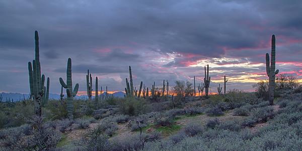 2016 Sonoran Desert