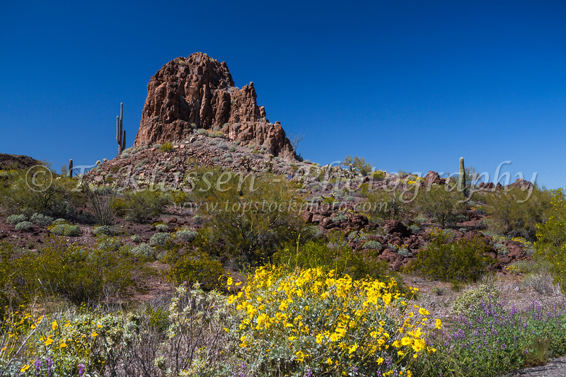 A view of the Sonoron Desert in spring north of Ajo, Arizona, USA.