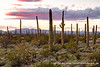 20190302_organ_pipe_cactus_national_monument_az_0016