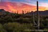 Sunset, Organ Pipe Cactus National Monument, Arizona