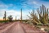Organ Pipe Cactus National Monument,AZ