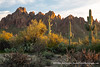 20190305_ironwood_forest_national_monument_az_0016