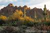 20190305_ironwood_forest_national_monument_az_0016