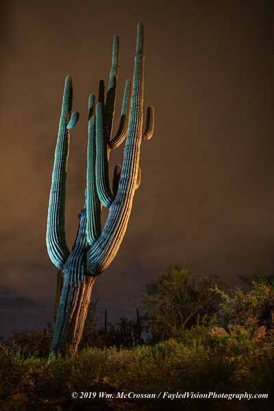 Saguaro Cactus at Night
