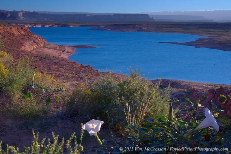 Sacred Datura & Lake Powell
