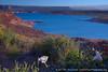 Sacred Datura & Lake Powell
