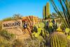Saguaro Nat'l Park, Arizona - 3-16 - C1 -0087 - 72 ppi
