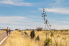ACA -  Near Upper Elgin Rd & Hwy 82, Arizona - D3-C3#1- - 72 ppi
